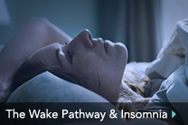 The Wake Pathway & Insomnia