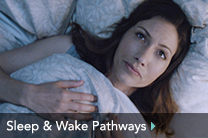Sleep & Wake Pathways