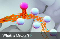 What Is Orexin?